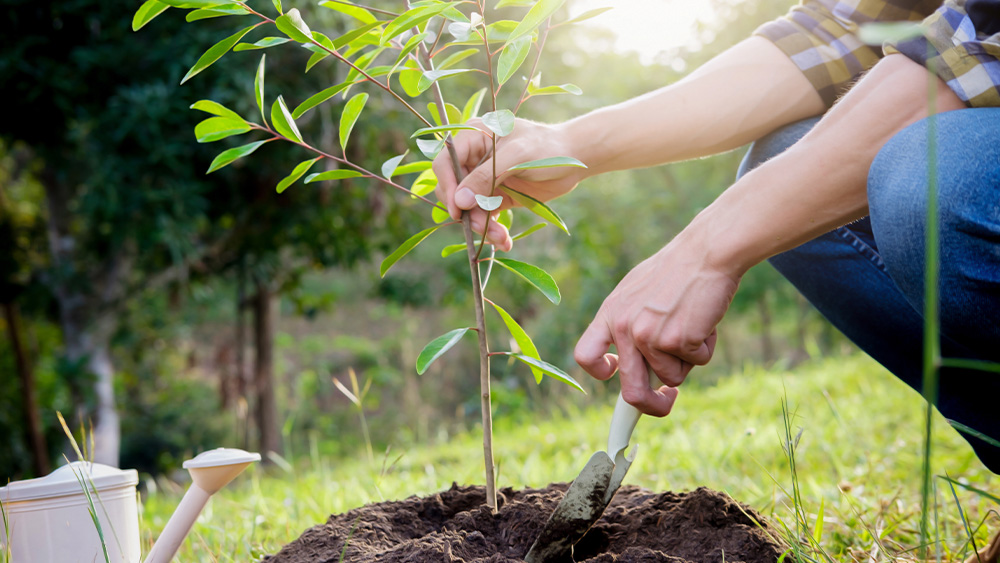 FRG and Century Partners Plant 26,000 Trees